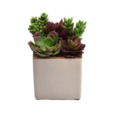 Sztuczna Roślina Sukulent W Doniczce 14 Cm 56836 33 Dpi