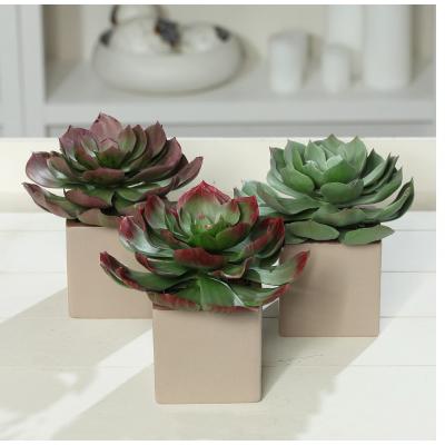 Sztuczna Roślina Sukulent W Doniczce Ceramicznej 16 Cm 56837